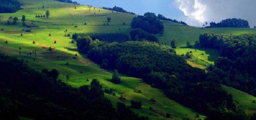 zlatibor planina